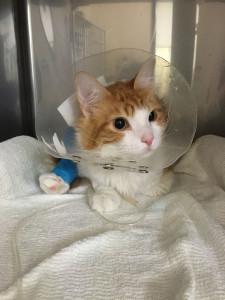 手術後のたまきち
